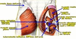 anatomia-anca-gluteo